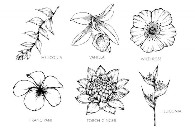 Inzamelingsreeks van de illustratie van de bloemtekening.