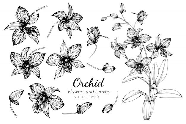 Inzamelingsreeks van orchideebloem en bladeren die illustratie trekken.