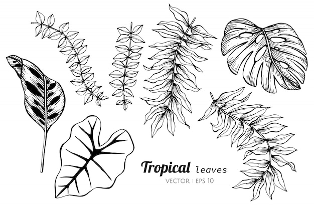 Inzamelingsreeks van tropische bladeren die illustratie trekken.