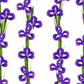 Irisbloem naadloos op witte achtergrond