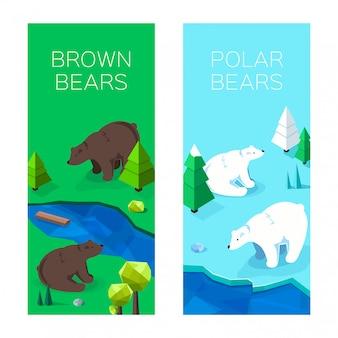 Isometrische ijsberen en bruine beren