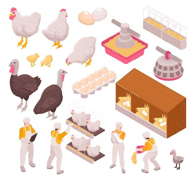 Isometrische kippenproductie pluimveehouderij met geïsoleerde afbeeldingen van menselijke arbeiders en boerderijdieren eieren