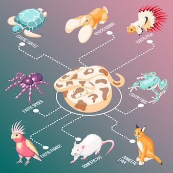 Isometrische stroomdiagram exotische huisdieren