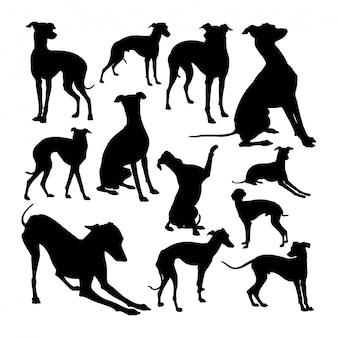 Italiaanse windhondhond dierlijke silhouetten.