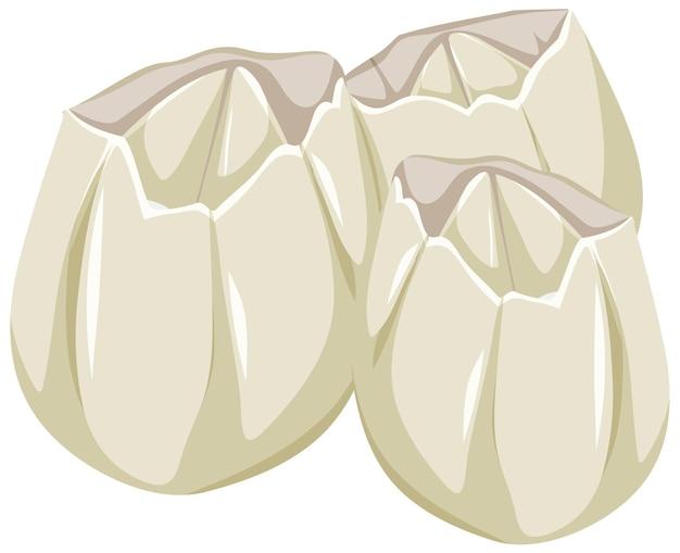 Ivoly zeepokken in cartoon-stijl op witte achtergrond