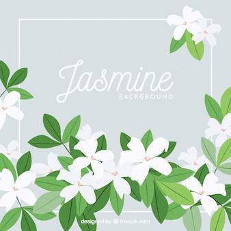 Jasmijnachtergrond met mooie bloemen