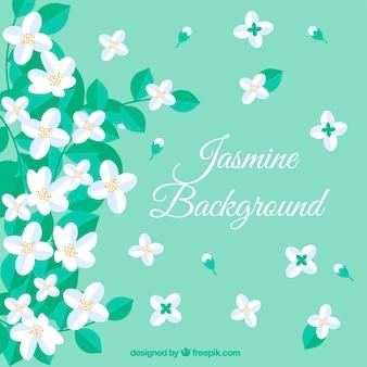 Jasmine achtergrond met platte bloemen