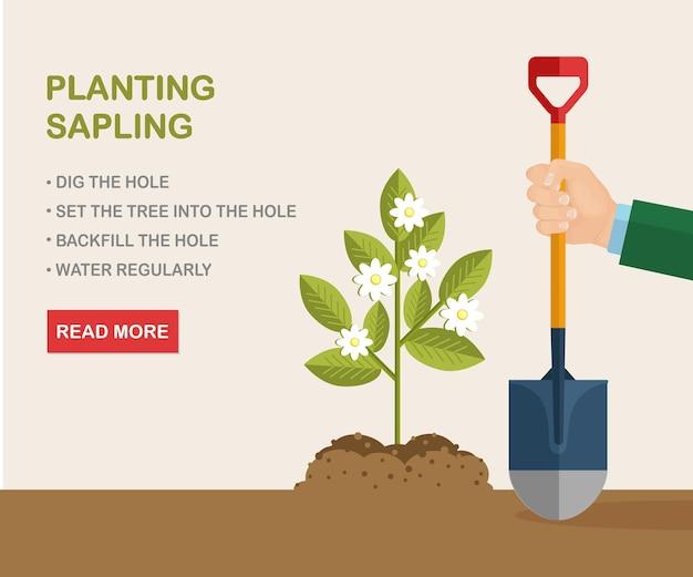Jong boompje planten. boer, tuinman houdt schop, spruit in aarde, grond. teelt, tuinieren