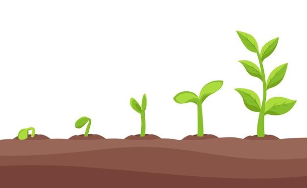 Jonge boompjes, spruiten groeifasen tekeningen set
