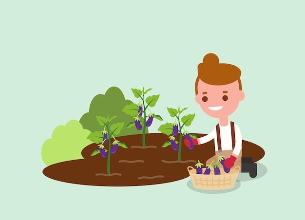 Jonge tuinman oogsten paarse aubergine. landbouwarbeiders illustratie. karakter.