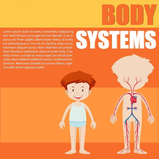 Jongen en lichaamssysteem diagram