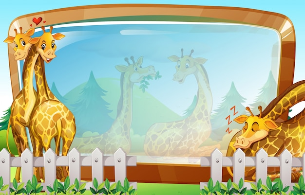 Kadersjabloon met giraffe in park