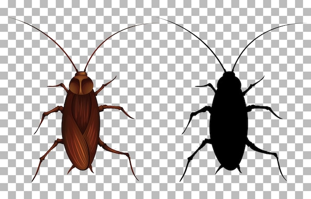 Kakkerlak op transparante achtergrond