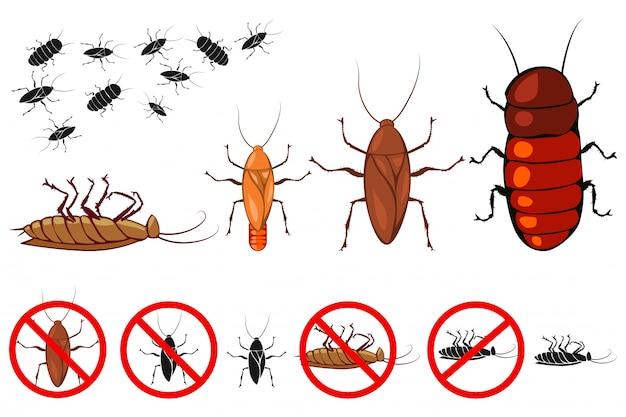 Kakkerlak set geïsoleerd wit