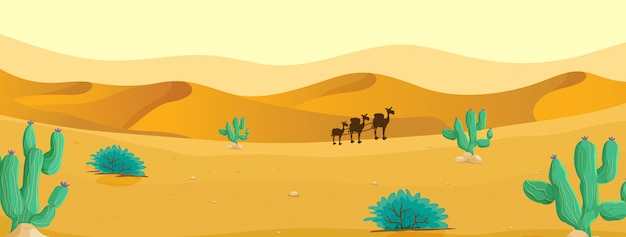 Kameel in de woestijn