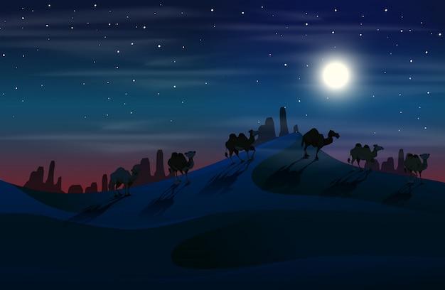 Kameel in woestijn 's nachts