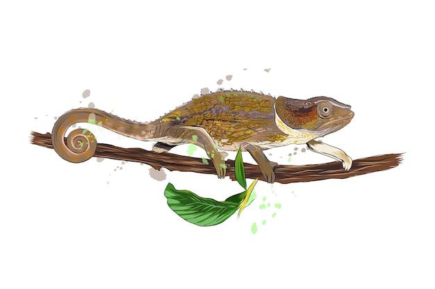 Kameleon uit een scheutje aquarel, gekleurde tekening, realistisch.