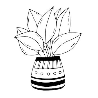 Kamerplant met grote bladeren