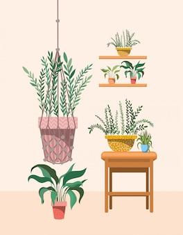 Kamerplanten in macrame hanger en planken