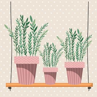 Kamerplanten in macrame-hangers en schommel