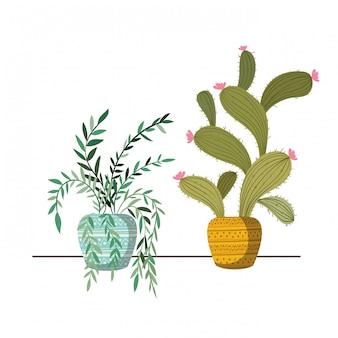 Kamerplanten met ingemaakt