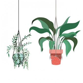 Kamerplanten op macrame hangers-pictogram
