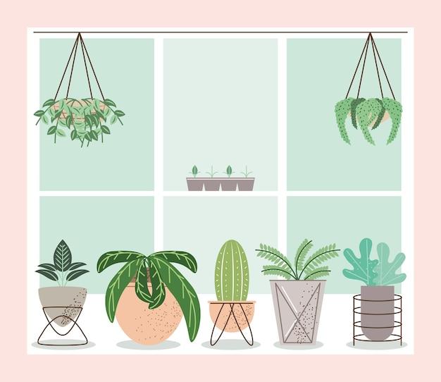 Kamerplanten voor het raam