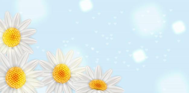 Kamille zomer achtergrond