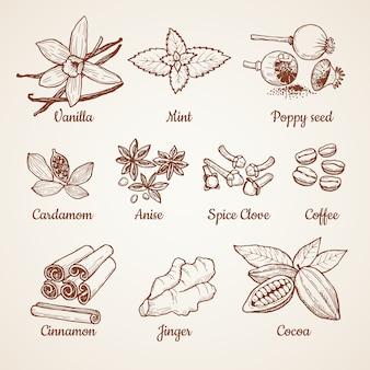 Kaneel, chocolade, citroen en andere keukenkruiden. hand getrokken illustraties. aroma kruidnagel en anijs, kruiden poppy, mint en vanille vector