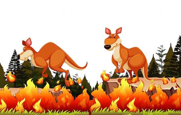 Kangoeroe ontsnappen aan het bosvuur