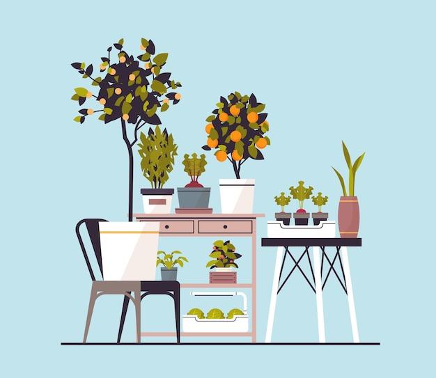 Kas potplanten op planken huis tuin concept vectorillustratie