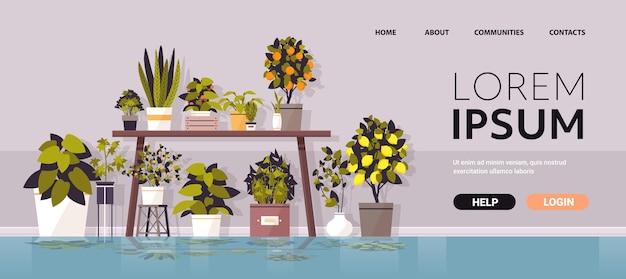 Kas potplanten op tafel tuinieren concept