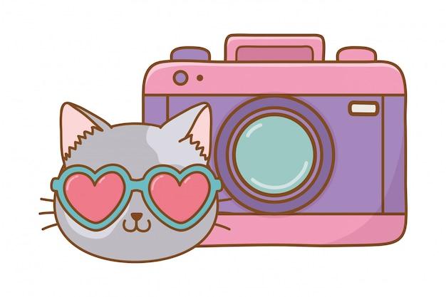 Kat en fotografische camera