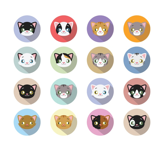 Kat gezichten collectie