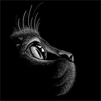 Kat met zwarte achtergrond.