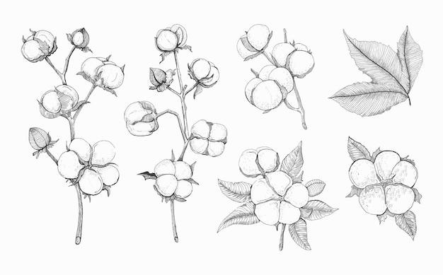 Katoen vector set schets van katoen tak en bloemen geïsoleerde tekening op witte achtergrond