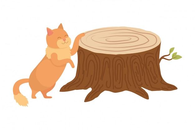 Kattenbeeldverhaal
