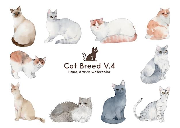 Kattenras aquarel illustratie