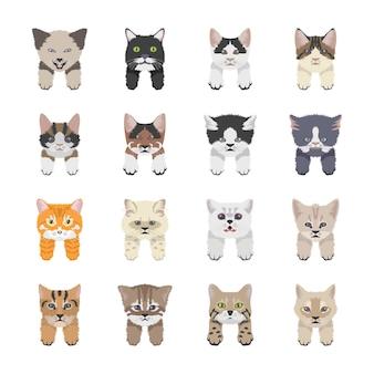 Kattenrassen pictogrammen