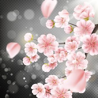 Kersenbloesem, sakura bloemen tak