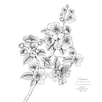 Kersenbloesem sakura bloemtekeningen