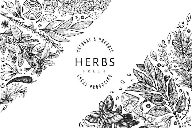 Keukenkruiden sjabloon. hand getekend vintage botanische illustratie. gegraveerde stijl. vintage voedsel achtergrond.