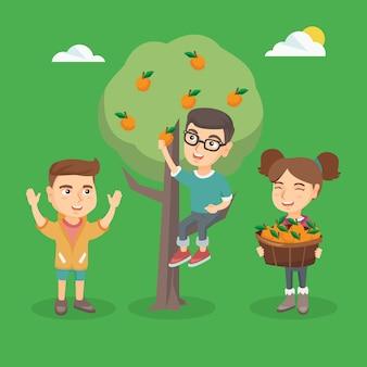 Kinderen die sinaasappelen in de boomgaard oogsten.
