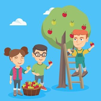 Kinderen oogsten appels in appelboomgaard.