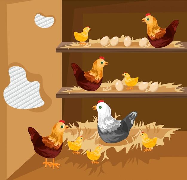 Kip die in een kippenren nestelt