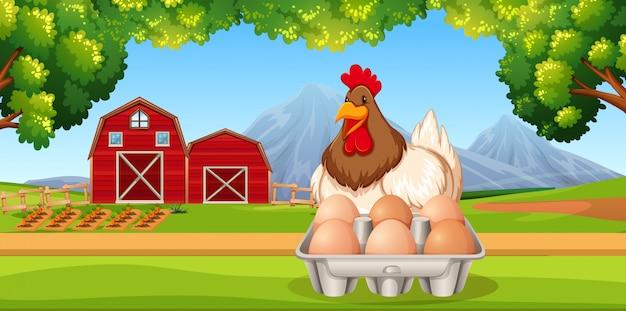 Kip met eieren boerderij scène