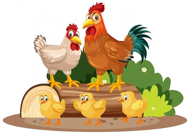 Kippen en kleine kuikens in het park