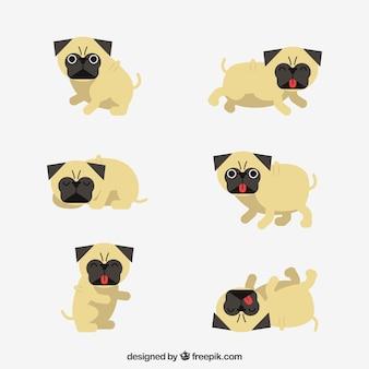 Klassieke set van leuke pugs