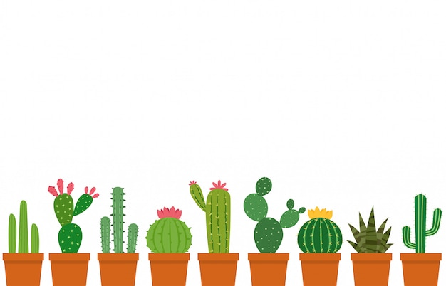 Kleine cactus pot set