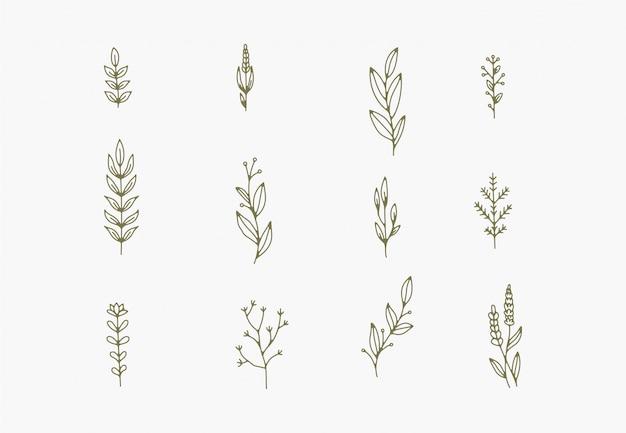 Kleine eenvoudige botanische illustraties, lijntekeningen, minimale ontwerpelementen. elegante en delicate plant doodles
